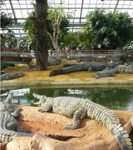 Ferme aux Crocodiles - Photo 3