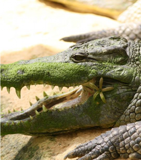 Ferme aux Crocodiles - Photo 4