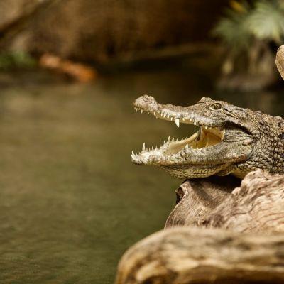 E-billet La Ferme aux Crocodiles Adulte - Pierrelatte