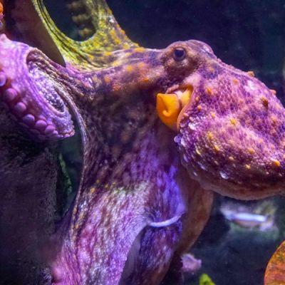 @ Tous droits réservés Aquarium de Paris