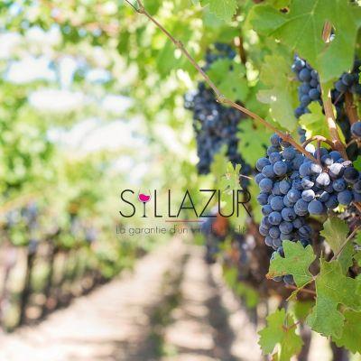 Syllazur, caves de qualité & épicerie fine - Ollioules/ Sanary/ Six-Fours