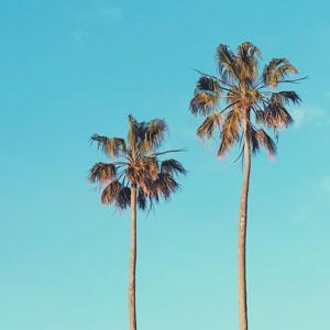 Le ciné à côté des palmiers
